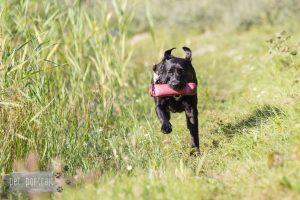 Privé Training bij DogWork