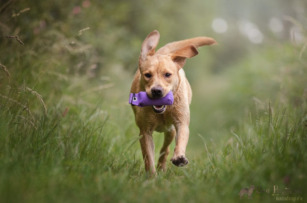 Over Belonen en Straffen - Hoe leren honden?