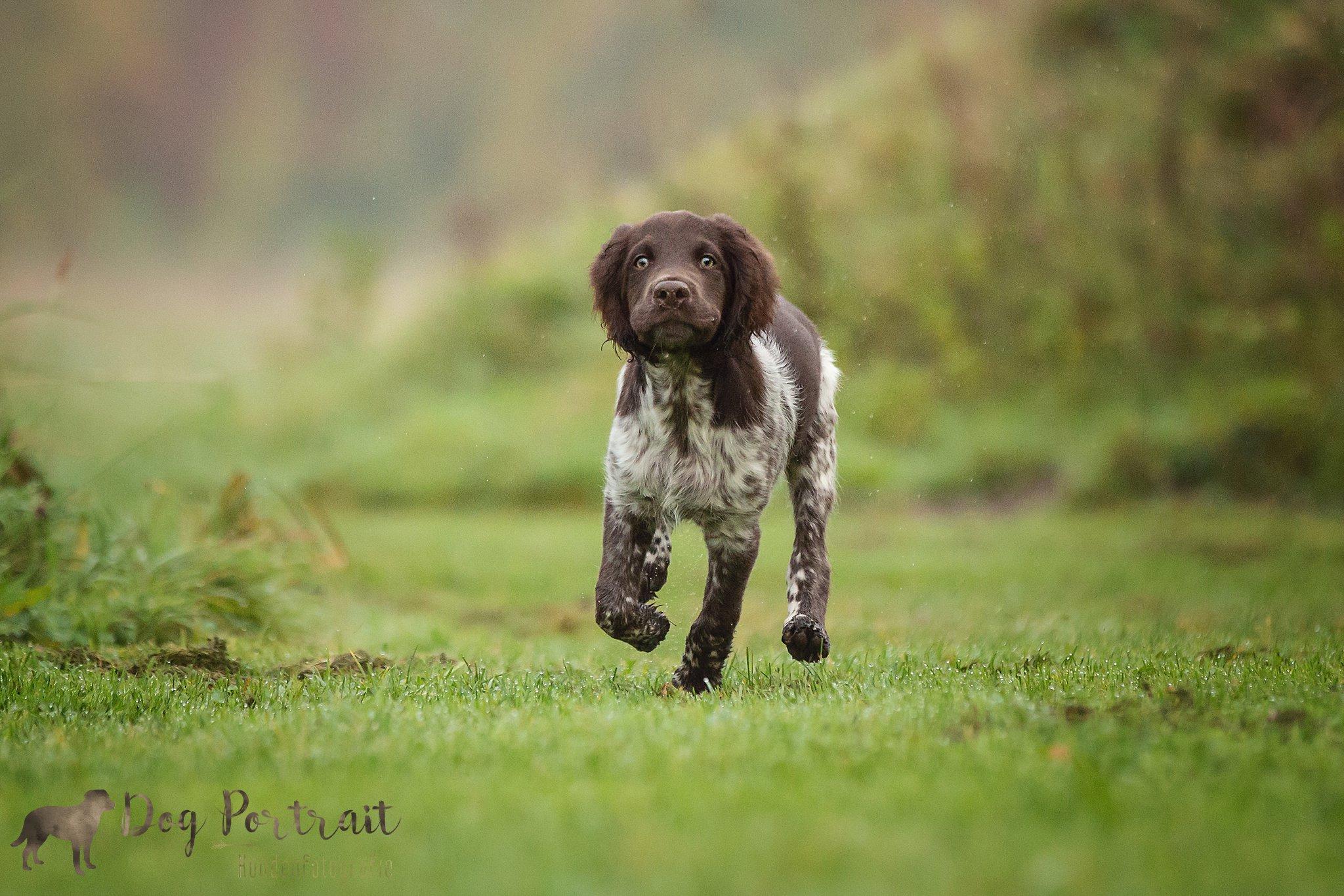 Cursist Spotlight: puppy Tibbe in Ooltgensplaat